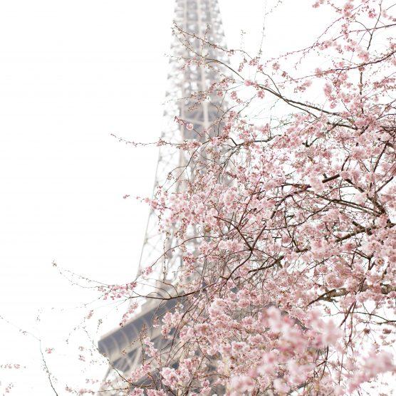 Le printemps arrive. Paris en Fleurs