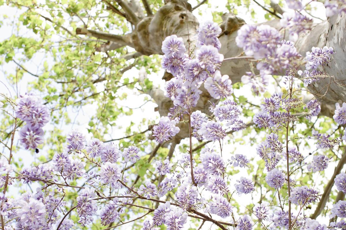 un printemps loin du quotidient pour cette séance de couple au Mas des violettes
