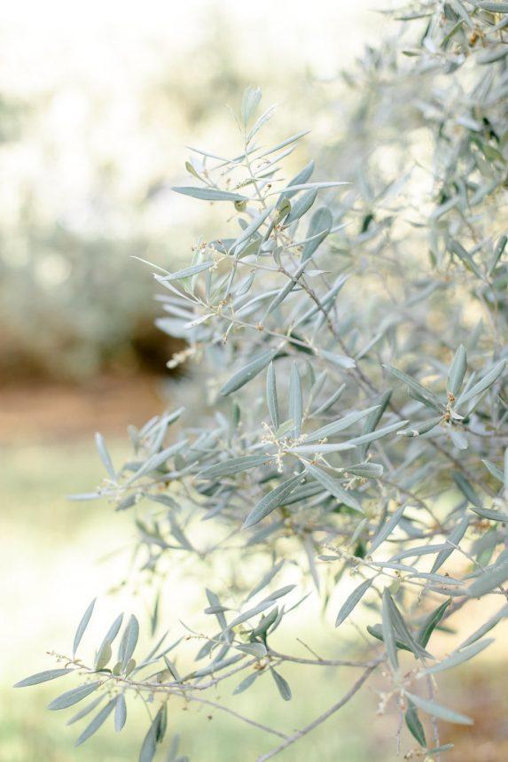 Une séance engagement romantique à l'accent provençal entre les oliviers